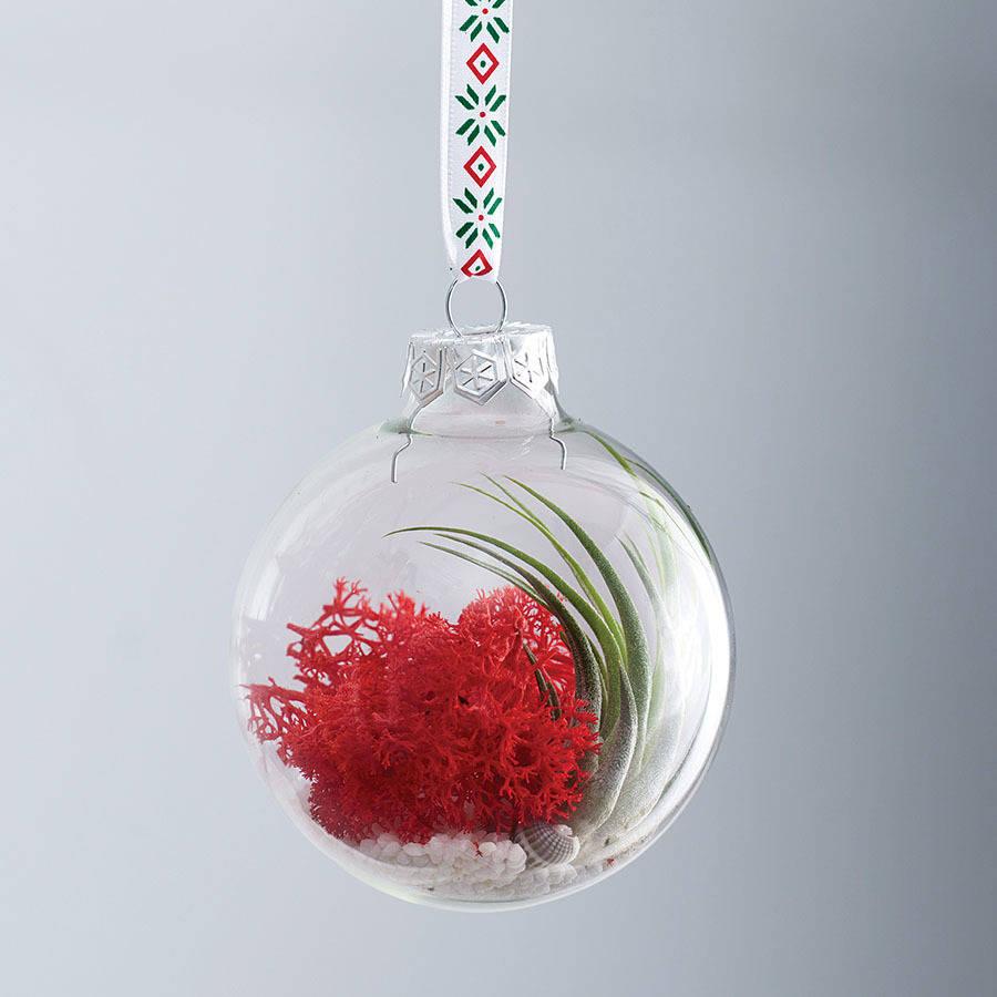 original_air-plant-terrarium-christmas-bauble